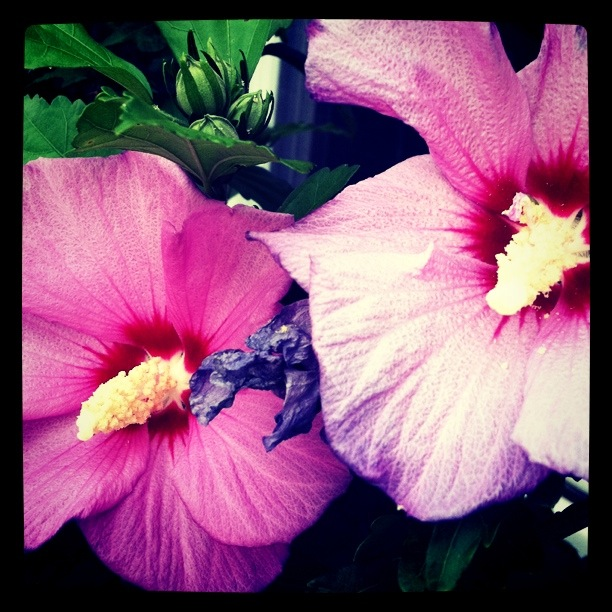 Regular ole boring flowers outside my house.  Everything looks a little cooler with some Instagram effects!