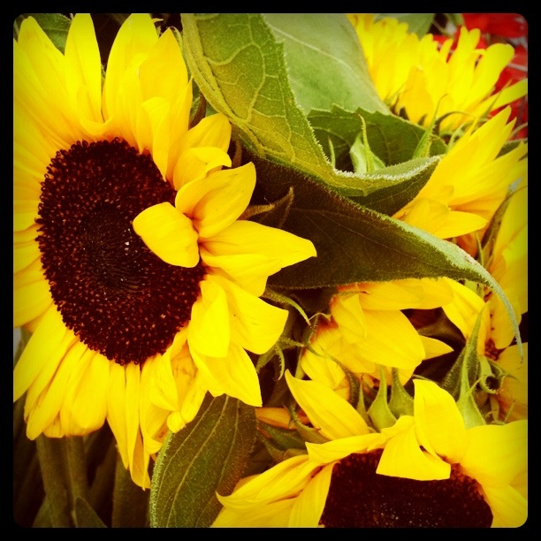 I'm a sucker for sunflowers. Always have been. Always will be. They suit my cheerful (and a teeny bit bold) personality.