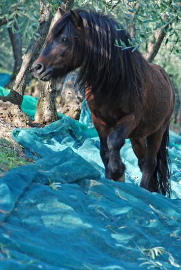 Hey there, pretty pony!